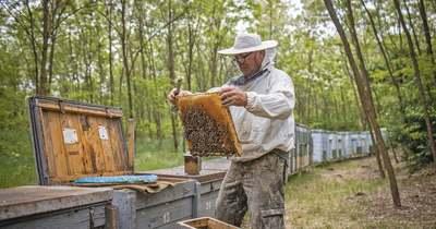 A méhészek Mekkájában jártunk