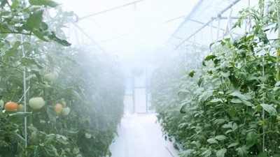Japán: egy üvegházon belül, monszun körülmények között tesztelik a zöldségtermesztést