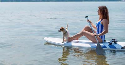 A gazdi nyaralása a kutyának lehet akár rémálom is
