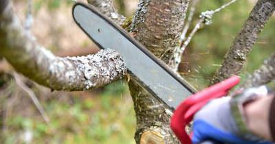 Hadat üzent a Nébih az illegális fakitermelőknek Somogyban is