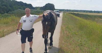 Elkóborolt lovat talált egy vízirendőr Szolnok közelében
