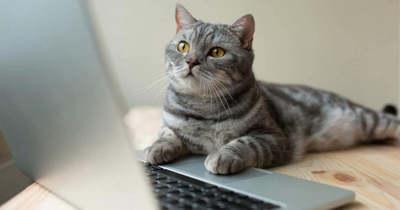 Öt rossz szokás, amivel tönkreteheti a laptopját