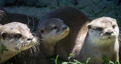 Kisvidrák születtek a gyöngyösi állatkertben, képeken a legifjabb lakók