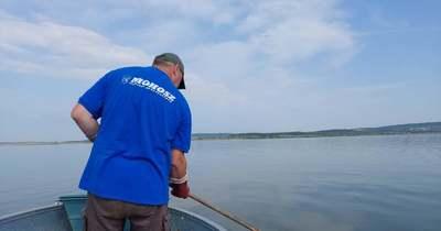 Javult a helyzet hétfőre, önkéntesek segítségével tovább gyűjtik a tetemeket a Velencei-tóból