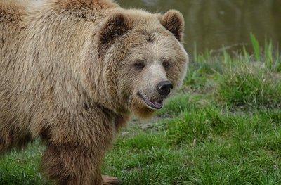 Ilyen állapotban van a medvetámadást szenvedő férfi: a szörnyű tragédia hétfőn történt