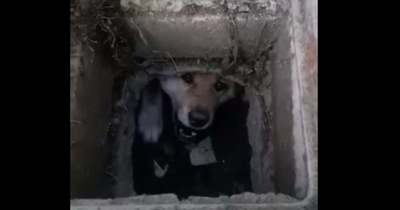 Csatornában rekedt kutyát mentettek Békéscsabán