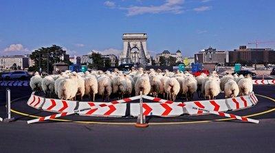 Karácsonynak újabb őrült ötlete akadt: a budapestiek nevetségesnek tartják