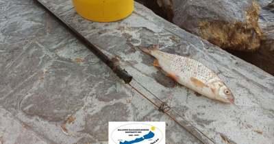 Szigonnyal akart halászni egy külföldi férfi a Balatonban