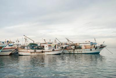 A halász sem hitt a szemének: ezt találta egy kifogott hal gyomrában