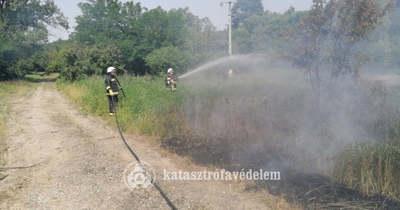 A leszakadt vezeték gyújtotta meg az avart kedden délelőtt (képek)
