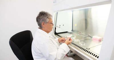 A boglári labort nem tudja átverni az ócska párizsi