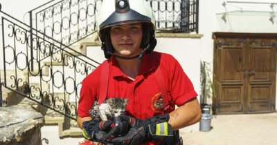 Kútba esett cicát mentettek a tűzoltók Bodajkon