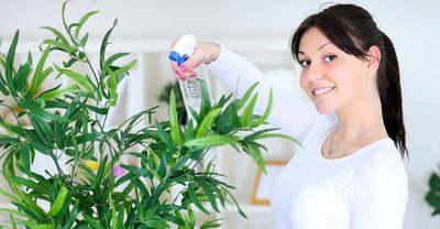 Így gondoskodj a szobanövényekről, ha nyaralni mész!