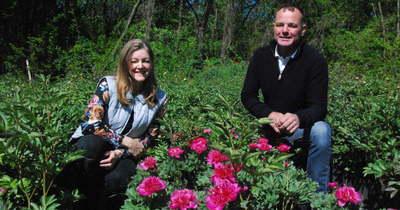 Két évtizede termeszt pünkösdi rózsát a vaskúti pár