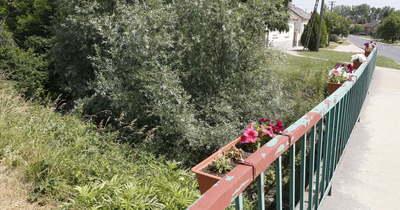 Újabb olvasói panasz: a Kodó patakban hamarosan arborétum nő