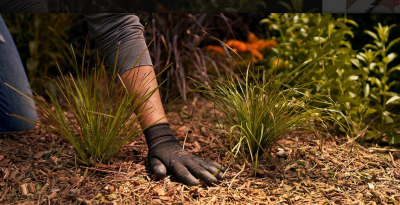 4+1 tipp, hogyan legyünk környezettudatosabbak a kertben is
