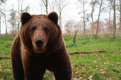 Medvét fotóztak egy isaszegi szántóföldön