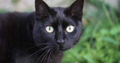 Titokzatos macskaeltűnések: több településről is érkezett panasz