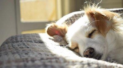 Felkavaró dolgokat tett kutyájával egy fiatal nő, mégsem vették el tőle
