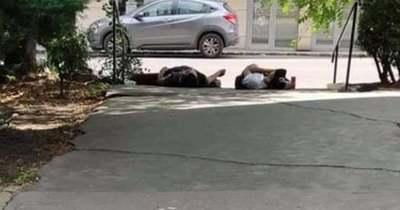 Elszomorító látvány Újlipótvárosban: a földön fetrengenek a szétesett drogosok – Fotók!