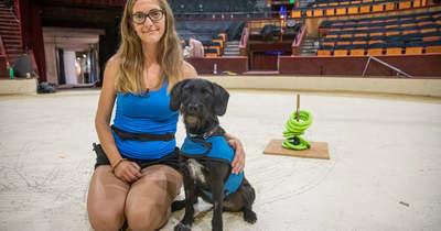 Suzyval, a keverék kutyussal állított fel magyar rekordot a soproni Locsmándi Anita