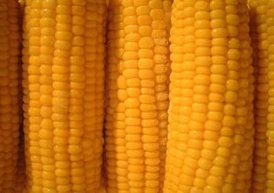 Ez a tökéletes főtt kukorica titka