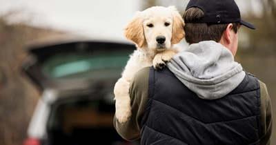 Sokkoló ami kiderült, így figyeli ki a kutyamaffia a tacskótsétáltatók címét – Fotók!
