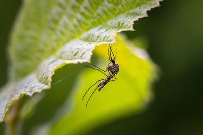 Tesznek róla, hogy a szúnyogok ne zaklassák a nyaralókat a Balatonnál