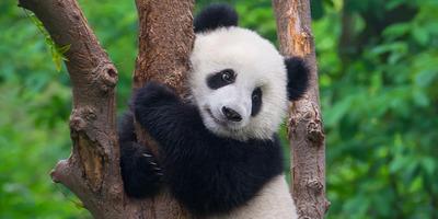 Ébresztő emberiség! - Miért semmisítjük meg az állatok élőhelyét?