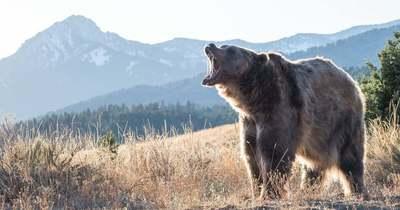 Két medvét is láttak pénteken hajnalban Egerben