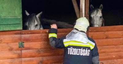 Borzalom, felgyújtották a Bükki Lovasparkot, égő bokszban állt a ló