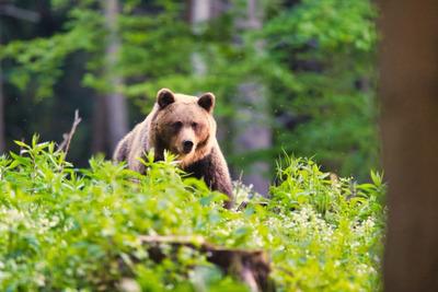 Sokkot kapott az egri lány, amikor szembetalálkozott a két medvével