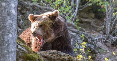 Ilyet sem láttál még: két medvét együtt
