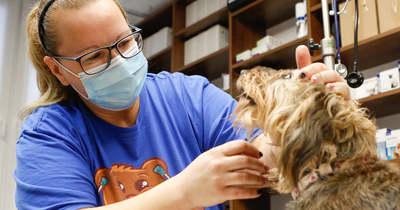 Miért nincs állatorvosi ügyelet Baranyában? – teszi fel a jogos kérdést olvasónk