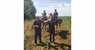Lovasrendőrök a kukoricásban találták meg az eltűnt zalai férfit