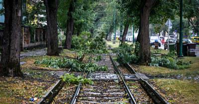 A kidőlt fák, leszakadt ágak a megyében
