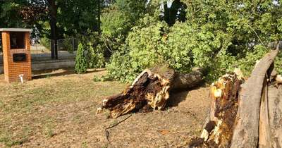 Több helyen döntött fát a vihar a megyében