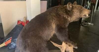 Felrobbantotta a netet a barnamedvét áruló óbudai férfi sztorija