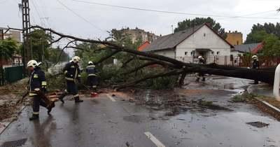 Pusztított a vihar: 10 méteres fát döntött ki Dorogon
