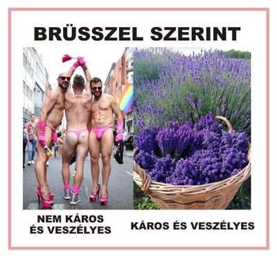 Brüsszel abszurditásain gúnyolódnak az interneten - kép