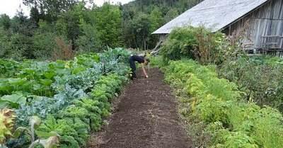 Ezeket a zöldségeket még elültetheted a kertedben