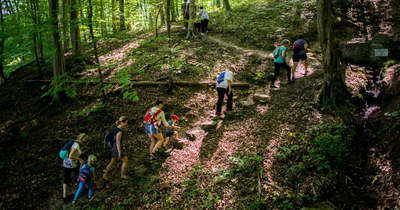 Felfedezték az erdő csodáit a telefonmentes tábor lakói