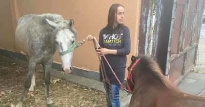 Két ló kóborolt Békéscsaba belvárosában