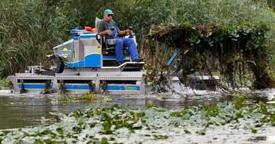 A Tisza-tó halainak számára nélkülözhetetlen a hínárkaszálás