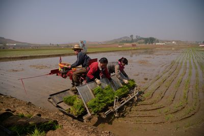 Kim Dzsongun a hadsereg rizsével eteti a népet