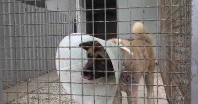 Leszakadt a füle, úgy találtak rá egy kutyára Cegléden