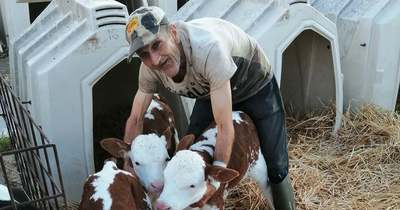 Hármas ikreket hozott világra egy teveli tehén, adjon nevet a borjaknak!
