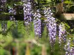 """3 növény, amely """"felöltözteti"""" a kertet"""