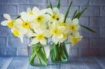 3 tavaszváró virág az otthonodba
