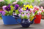 Árnyékos vagy napos? 8 különleges növény a balkonra